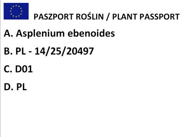 Zanokcica hebanowa (Asplenium ebenoides)
