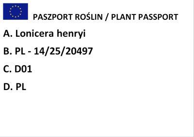 Wiciokrzew Henry`ego (Lonicera henryi)